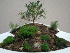 Jardin Zen exemple réalisé lors de la formation hortithérapie ANFE 2014
