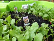 Pierre nous partage de jolies photos du résultat des semis