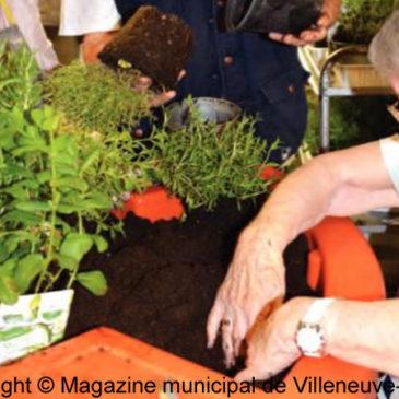 CCAS de Villeneuve-le-Roi (94) offre un jardin des senteurs aux habitants de la Résidence Jean-Rostand
