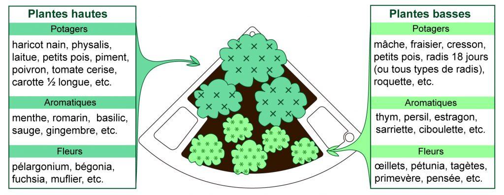 composition plantes dans un bac de jardin Verdurable