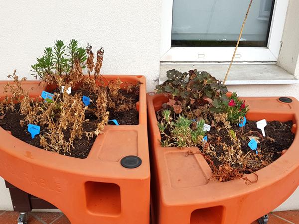 atelier noël 1 jardin avant nettoyage