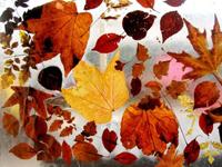 déco automne 3