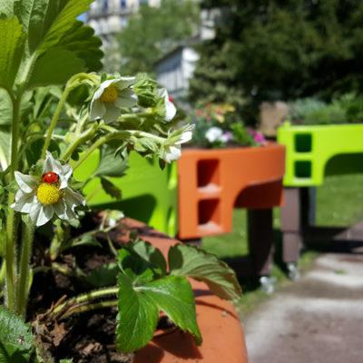 jardin adapte hôpital la Rochefoucauld 2018