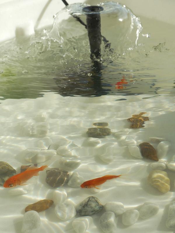 jardin aquatique-verdurable