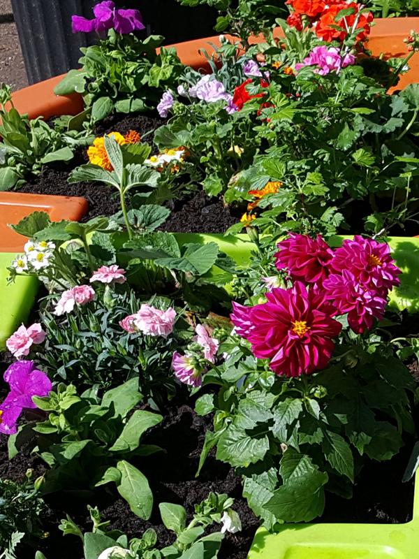 jardin floral réalisable dans la jardinière Verdurable