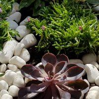 jardin alpin-verdurable