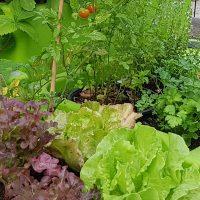 jardin potager-verdurable