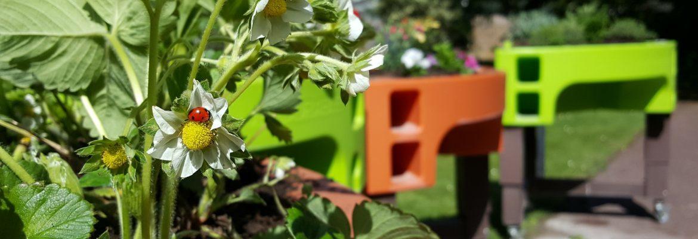 jardin printanier potager adapté maison de retraite verdurable