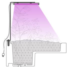 schema lampe de croissance