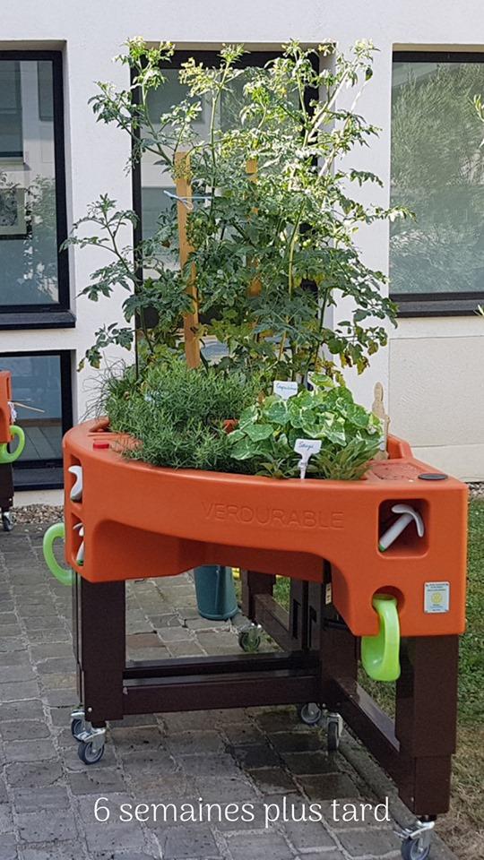 évolution du jardin LPSP Versailles