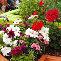 jardin composé des fleurs comestibles