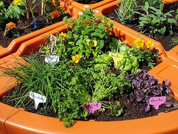 jardin senteur
