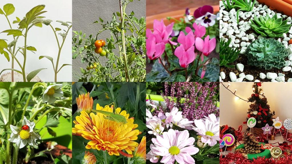 4 saisons au jardin calendrier avec thèmes