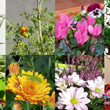 Autour du jardin pendant toute l'année