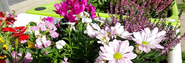 jardin automnal Verdurable 2019