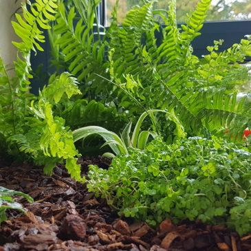 Quelles précautions pour organiser votre jardin intérieur en hiver ?