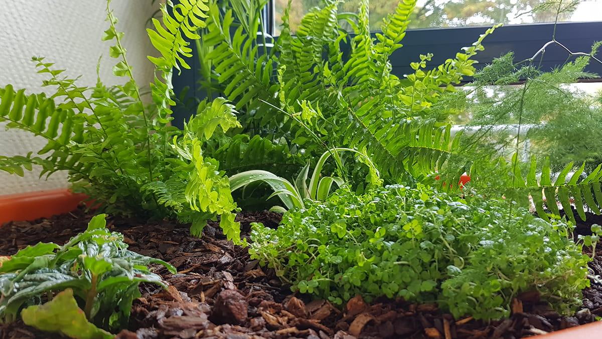 jardin interieur coin verdure