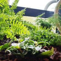 fougère du jardin d'intérieur dans l'ehpad