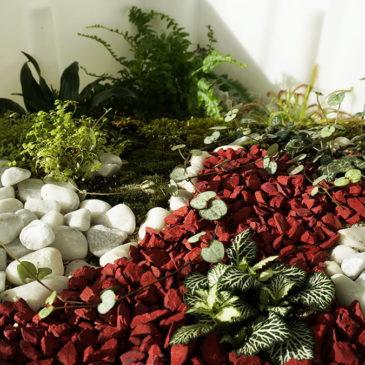 Terrarium, le jardin s'invite chez vous