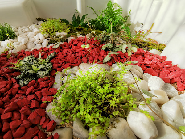 terrarium humide de verdurable détail