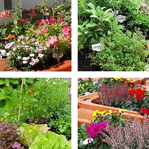 thèmes variants pour un jardin sensoriel