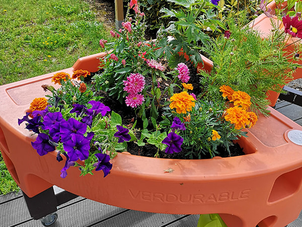jardin floral dans l'EHPAD Jardin des vignes à Chateaumeillant