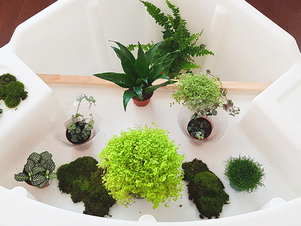 plantes choisies pour le terrarium