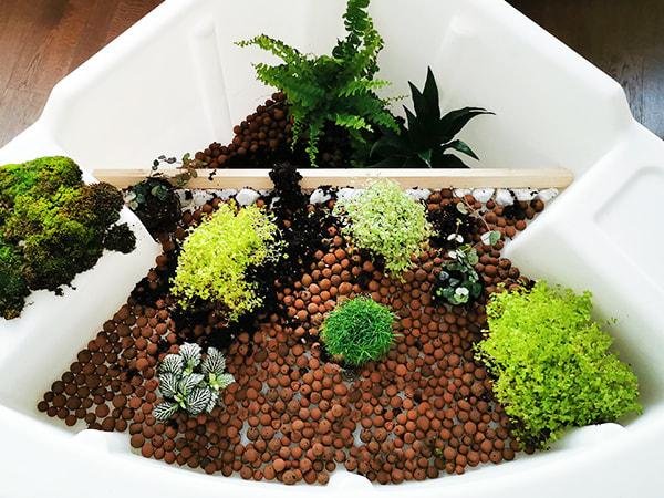 Etape 3 definir la composition des plantes