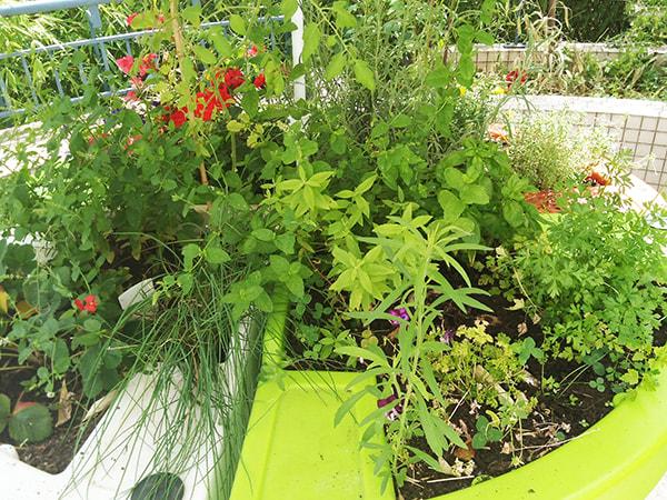 jardin en été vue sur la terrasse 1er août 2019