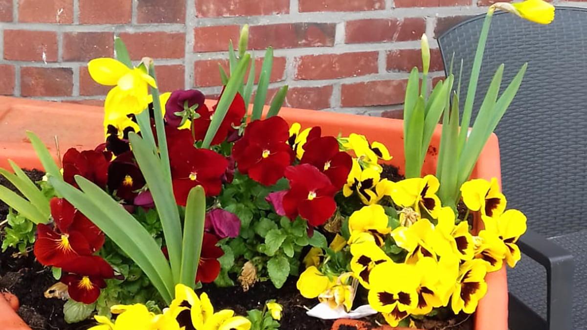 jardin-hortitherapie-ch-peronne