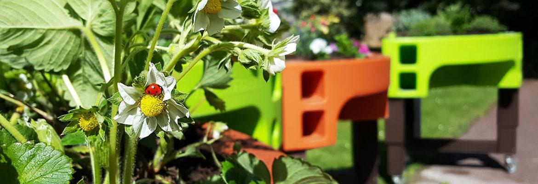 jardin printanier potager adapte verdurable 2020