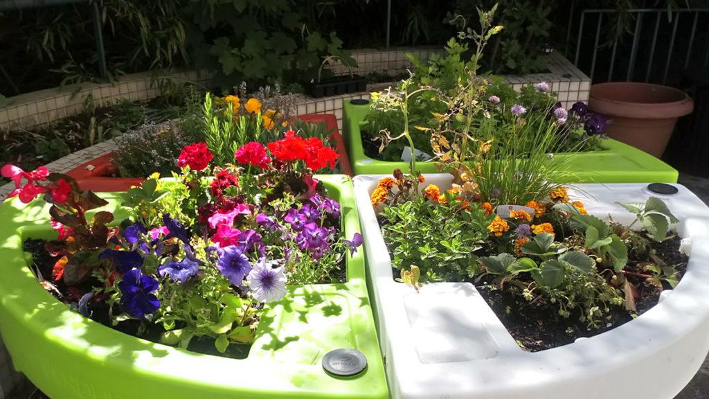 jardin sur terrasse destiné à l'hortithérapie à l'hôpital Lagache 2019