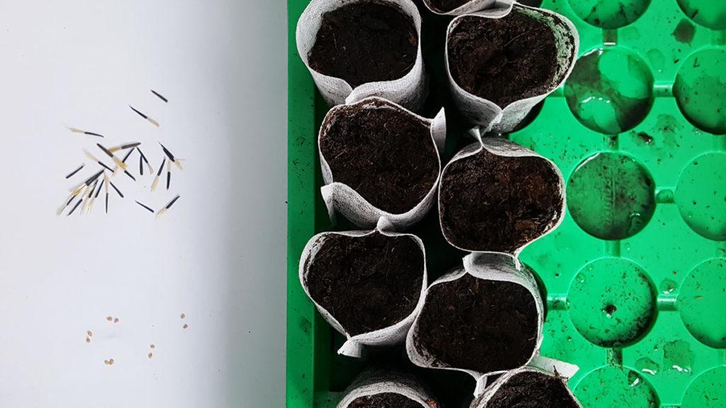 faire les semis au printemps