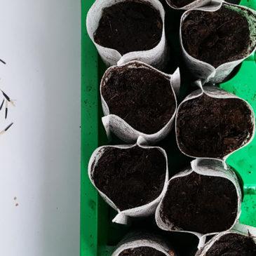 Comment faire vos semis au printemps ?