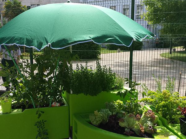 le jardin sous parasol durant la canicule