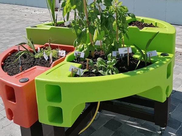 les plantes se poussent pendant le confinement