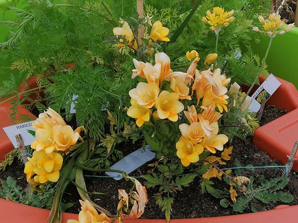 jardins fleurissent sous le soleil de juin
