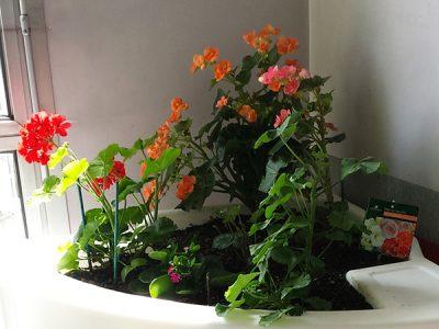 fleurs d'été dans l'interieur de l'Ehpad