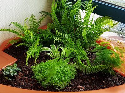coin de verdure en intérieur