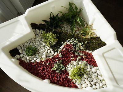 créer un terrarium humide