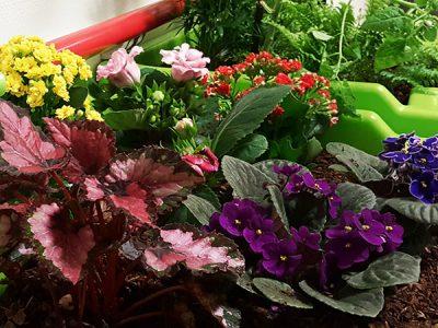 fleurs d'automne à l'interieur de l'établissement de santé