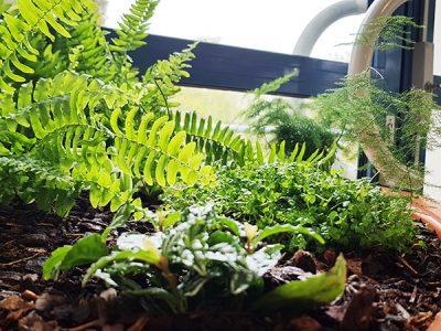 fougere du jardin interieur ehpad