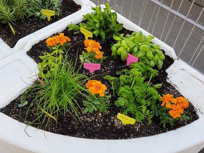 jardin aromatique et savoureux