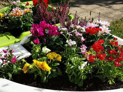 jardin d'automne floral bruyère cyclamen oeillet pensée