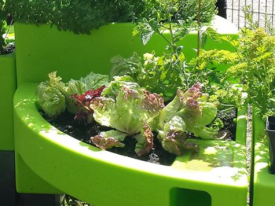jardin de salades
