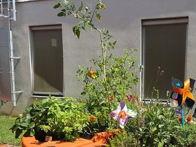 jardin potager en été