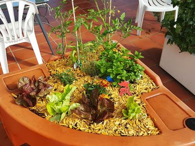 jardin potager de salades