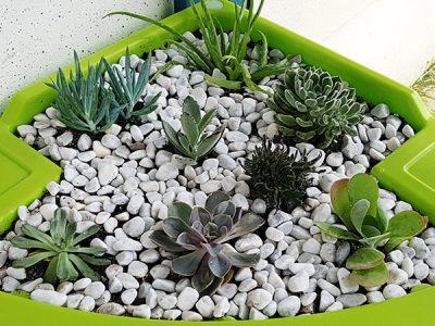 jardin des succulentes en intérieur