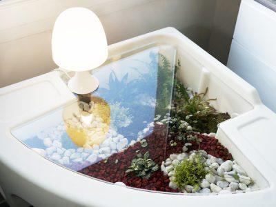 terrarium humide ambiance du jour couvert de plateau plexiglass de verdurable