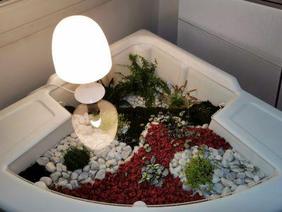 terrarium humide de verdurable couvert par plateau plexiglass ambiance du soir